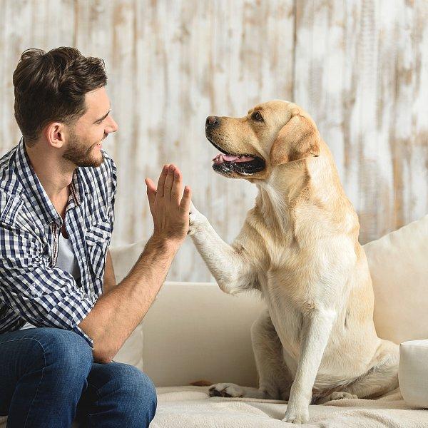 Tipy a triky pro spokojené soužití s domácími mazlíčky