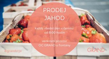 Prodej jahod u OC GRAND